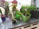 Galeria Zakładamy kącik przyrodniczy oraz ogród