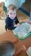 Galeria Dożynkowe ciasteczka - realizacja projektu Mały Kuchcik